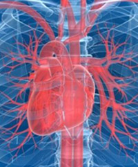 Vascular layout